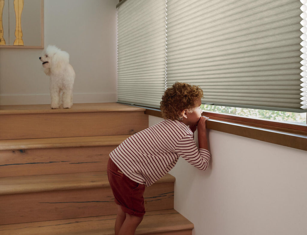 boy peeking under honeycomb shades with dog in the background